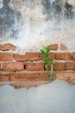 Viejo fondo de la pared de ladrillos Foto de archivo