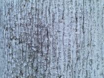 Viejo fondo de la textura de la corteza de árbol Fotografía de archivo