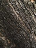 Viejo fondo de la textura de la corteza de árbol Foto de archivo