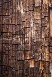 Viejo fondo de madera de la textura Imagen de archivo libre de regalías