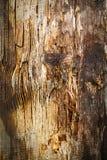 Viejo fondo de madera de la textura Imágenes de archivo libres de regalías