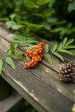 Viejo fondo de madera del otoño con los elementos naturales: conos, sorba, bayas rojas y hojas Fotos de archivo libres de regalías