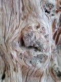 Viejo fondo de madera del primer de la textura del tablón Fotos de archivo libres de regalías