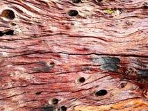 Viejo fondo de madera del primer de la textura del tablón Imágenes de archivo libres de regalías