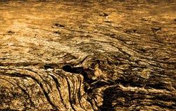 Viejo fondo de madera marrón de la textura Fotografía de archivo libre de regalías