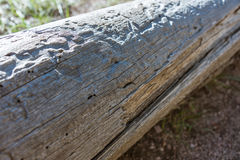 Viejo fondo de madera natural del registro, picea del color gris, con las grietas, rastros de los escarabajos de corteza Primer,  Imagen de archivo