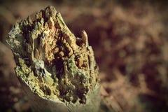 Viejo fondo de madera roto de la textura del árbol Foto retra del vintage con el uso de los filtros de color Imagen de archivo