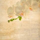 Viejo fondo de papel texturizado con la orquídea blanca y magenta Imagenes de archivo