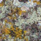 Viejo fondo de piedra Imagen de archivo libre de regalías