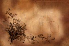 Viejo fondo del herbario Foto de archivo