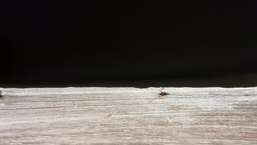 Viejo fondo del negro del tablero de madera