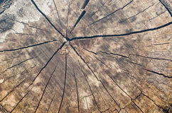Viejo fondo del tocón de árbol, textura de madera resistida con el corte transversal de un registro del corte Foto de archivo libre de regalías