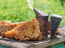 Viejo fumador de la abeja Fotos de archivo
