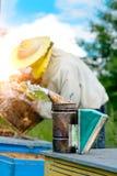 Viejo fumador de la abeja El apicultor trabaja en el colmenar cerca de las colmenas Herramienta de la apicultura Apicultura Fotos de archivo