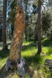 Viejo gancho clásico en el bosque imagen de archivo