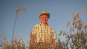 Viejo granjero en una situación del sombrero en el campo de la avena en la puesta del sol almacen de metraje de vídeo