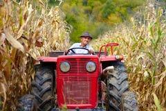 Viejo granjero que conduce el tractor en el campo de maíz Foto de archivo libre de regalías
