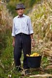 Viejo granjero que sostiene un cubo lleno de mazorca de maíz Fotografía de archivo libre de regalías