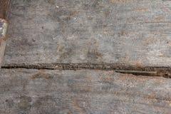 Viejo grunge enselvado y hormigas del fondo de la textura Fotos de archivo
