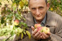 Viejo hombre con las manzanas en manos en huerta Foto de archivo libre de regalías
