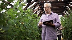 Viejo hombre con PC de la tableta en invernadero en granja almacen de video