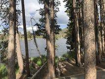 Viejo hombre Cypress en el lago largo Imagen de archivo libre de regalías