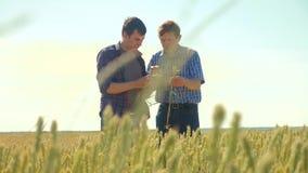 Viejo hombre del apretón de manos del verano de dos granjeros en su campo de trigo del smartphone que corre en el pan del trigo d metrajes