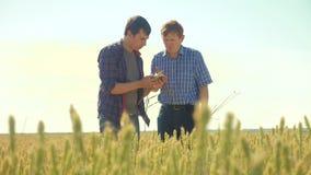 Viejo hombre del apretón de manos del verano de dos granjeros en su campo de trigo del smartphone que corre en el pan del trigo d almacen de video