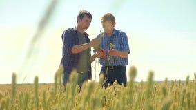 Viejo hombre del apretón de manos del verano de dos granjeros en su campo de trigo del smartphone que corre en el pan del trigo d almacen de metraje de vídeo
