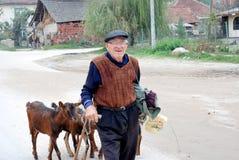 Viejo hombre y sus cabras que van a casa después de pasto en el pueblo cerca de la ciudad de Strumica, Macedonia Foto de archivo libre de regalías