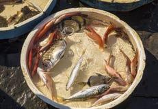 Viejo mercado tradicional de pescados frescos Fotos de archivo libres de regalías