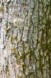 Viejo modelo de madera del fondo de la textura del árbol Imagen de archivo