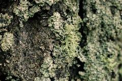 Viejo modelo de madera del fondo de la textura del árbol Foto de archivo