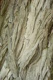 Viejo modelo de madera del fondo de la textura del árbol Imagenes de archivo
