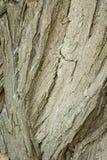Viejo modelo de madera del fondo de la textura del árbol Fotografía de archivo libre de regalías