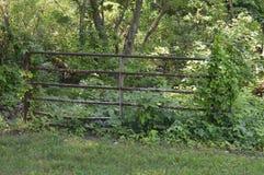 Viejo Rusty Fence en el bosque a lo largo de una cala fotos de archivo