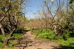 viejo scenico di leon Nicaragua Fotografia Stock
