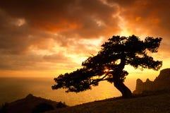 Viejo silhoutte del árbol Fotografía de archivo libre de regalías