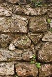 Viejo stonewall con las plantas Fotos de archivo