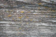 Viejo tablero de madera oscuro con el liquen amarillo Foto de archivo