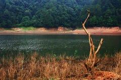 Viejo tred por la mañana de oro del lago, China Imagen de archivo