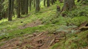 Viejo verano verde del bosque almacen de metraje de vídeo