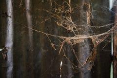 Viejo web de araña polvoriento en casa Imágenes de archivo libres de regalías