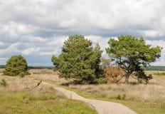 Viejos árboles de pino y garss del brezo debajo de una manera de la bicicleta Foto de archivo libre de regalías