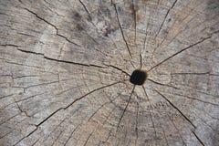 Viejos anillos de árbol de madera Texture-1 Fotografía de archivo libre de regalías