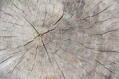 Viejos anillos de árbol de madera Texture-2 Foto de archivo libre de regalías