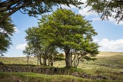 Viejos pared y tres del granito en Dartmoor en Inglaterra Fotos de archivo