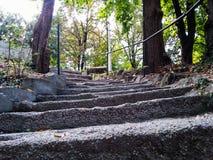 Viejos pasos del cemento en parque Foto de archivo libre de regalías