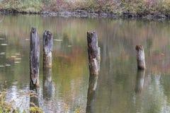 Viejos posts rústicos que resaltan del río de Ausable con encanto Imagen de archivo libre de regalías