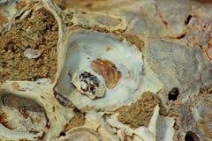 Viejos shelles Imágenes de archivo libres de regalías